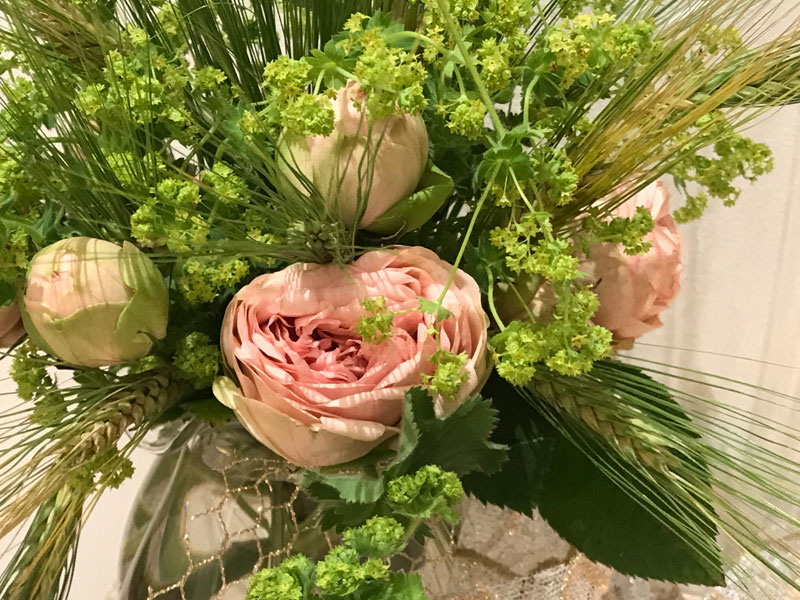 Piano garden roses