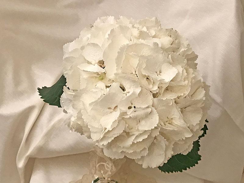 snowball hydrangea closeup